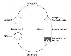 uexkull_functionnal-circle
